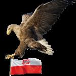 Logo-polennieuws-001-150x150