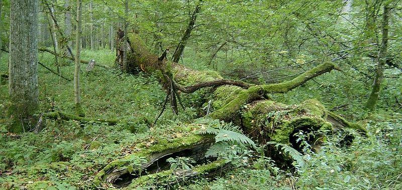 Białowieża Nationaal Park