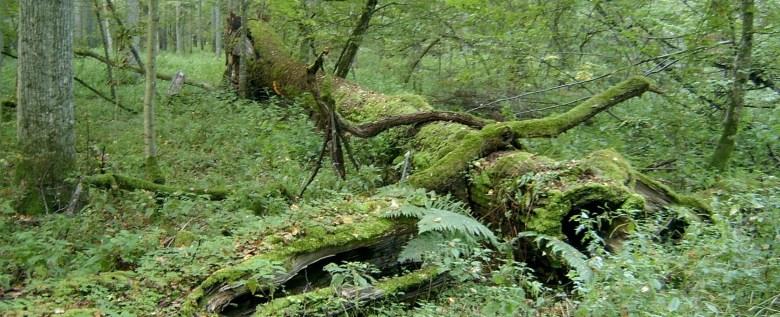 kappen van bomen